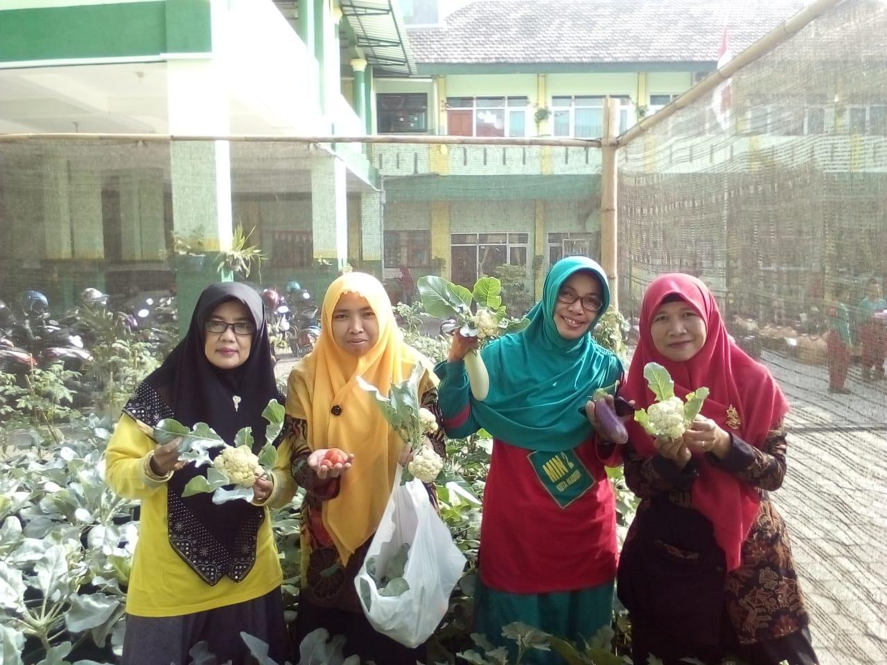 MIN 2 Kota Madiun Panen Sayuran Organik